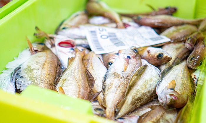 pescado-gallego